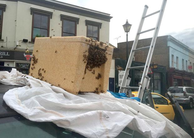 Beekeeper Phil Clarkson uses a portable hive to capture a swarm of bees at Greenwich Church Street, close to the famous Greenwich market, in south-east London. PA