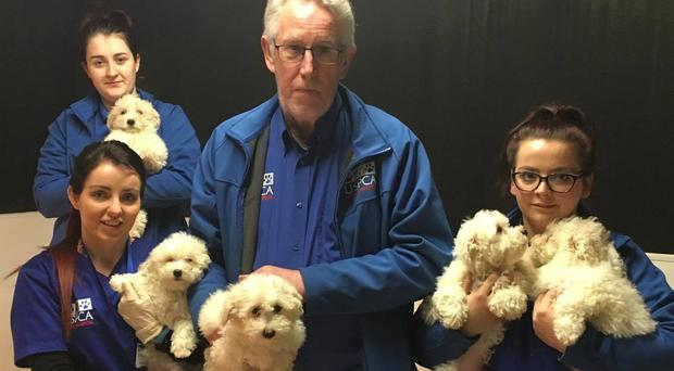 Members of the USPCA Veterinary Care Team looking after rescued puppies at the USPCA Animal Hospital in Newry. Photo: USPCA