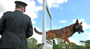 Dogged: police dog Mike with his handler Constable McCrea