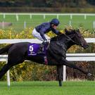 Cliff tops: Cliffs Of Moher will go for glory in the Epsom Derby on Saturday