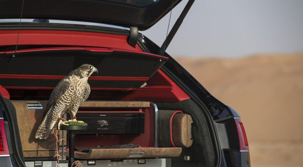 Bentley's in-house commissioning division Mulliner has shown just how luxurious it can make a Bentayga SUV by equipping one with a unique falconry kit.