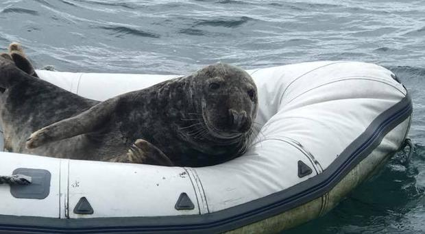 Sammy taking it easy in a dinghy off the Copeland Islands on Saturday.