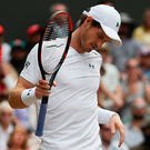 Down and out: Andy Murray on way to defeat against Sam Querrey. Photo: Getty Images