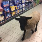 The wooly shopper spotted in Lidl