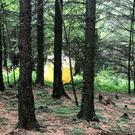 Hillsborough Forest, where a man's body was found yesterday