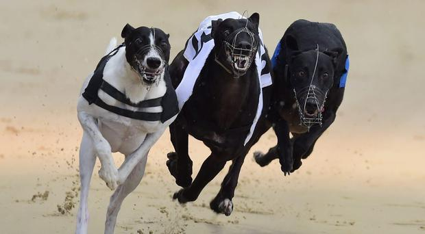 Fernisky Darkie ran a sensational 28.61 seconds victory on a fast Drumbo Park surface in only his third race. (stock photo)