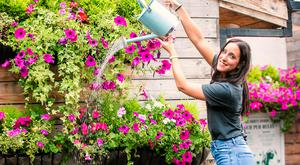 The Dirty Onion's Elisa Leandro celebrates Ulster in Bloom success