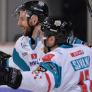 Net boost: Belfast Giants' Colin Shields scores against the Sheffield Steelers last night