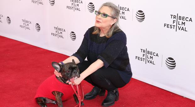 Pictured: Gary the dog and Carrie Fisher in 2016 (Photo by Robin Marchant/Getty Images for Tribeca Film Festival)