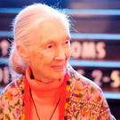 Dr Jane Goodall has been the focus of more than 40 films