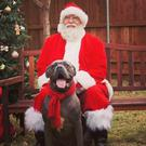 Dog Wilbur with Father Christmas (Prosper Trail Animal Hospital, Prosper, Texas)