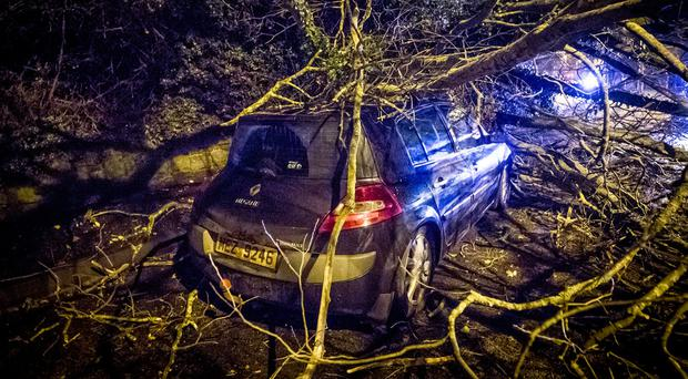 The scene on the Shore Road at Rathcoole Drive where a tree has fallen on a car. December 29th 2017 (Photo by Kevin Scott / Belfast Telegraph)