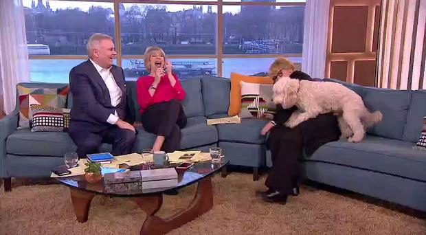 Brenda Blethyn being inappropriately mounted by her dog during ITV This Morning's live broadcast. (This Morning/PA Wire)