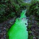 A section of the Colin Glen river in Dunmurry turned green due to testing.