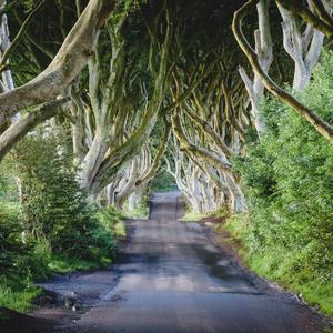 The Dark Hedges. (Image by Samuel Jeffery)