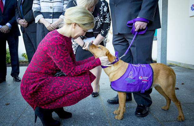 Darcey the therapy dog The Countess of Wessex Officially opens the new adult Northern Ireland Hospice building in Belfast on January 23rd 2018 (Photo by Kevin Scott / Belfast Telegraph)