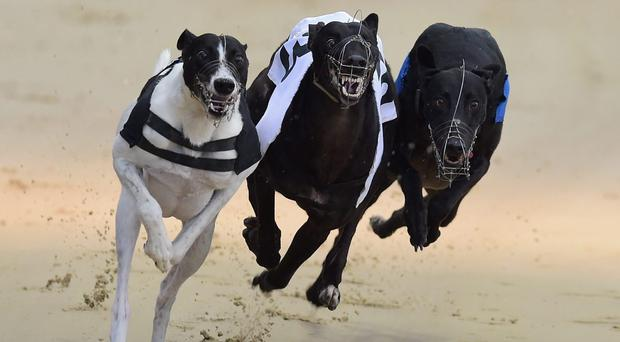 Belfast's Philip Moore had every reason to celebrate after his black bitch Dee Bee Dutchess lifted the 600 A1/2 final over 600 yards at Shelbourne Park. (stock photo)