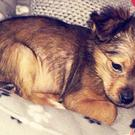Police are appealing for information after 11-week-old Sparky was killed.