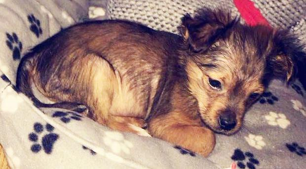 Sign: Justice for Puppy Beaten with Hammer and Put in Microwave