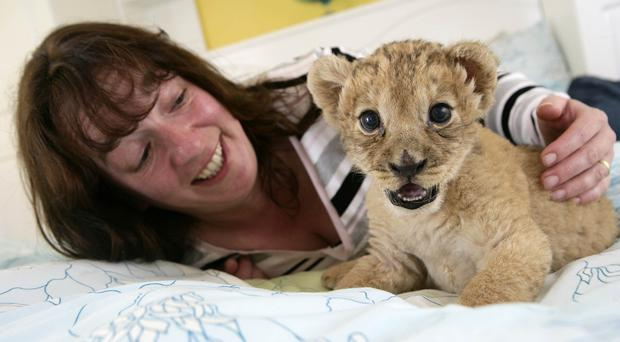 Zookeeper Linda Frew with lion cub Lily