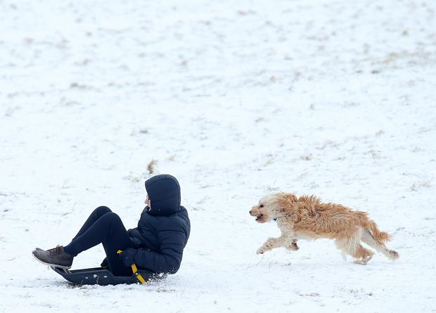 Press Eye - Belfast - Northern Ireland - 2nd March 2018 Fun in the snow at Shaws Bridge in Belfast as snow continued to fall overnight in parts of Northern Ireland. Picture by Jonathan Porter/PressEye
