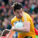 Key man: Niall McKeever faces fight to be fit for campaign