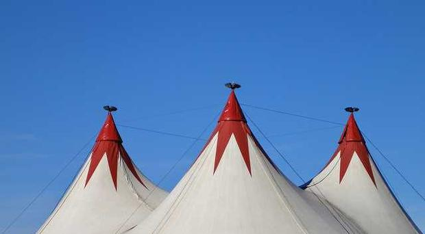 The 11-year-old is accused of breaking his bail conditions by attending the circus.