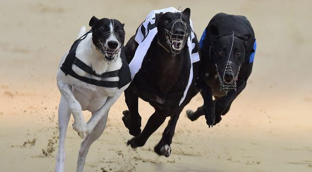 Two competitive semi-finals of Gribben Motors 525, with a prize of £800 awaiting next week's winner, provided good racing at Drumbo Park on Saturday night with Fernisky Tango and Ten Or Jack coming away as winners (stock photo)