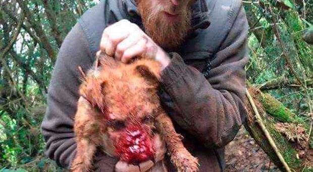 Neil Pinkerton with his dog Judy, which was left savagely cut and bleeding following a fox hunt.