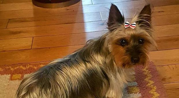 A family have appealed for a thief to return their dog after she was stolen along with a van in Dundalk on Monday evening.