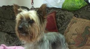 A Dundalk family is appealing for information after their 12-year-old dog Trixie was stolen with a van on Monday April 25.