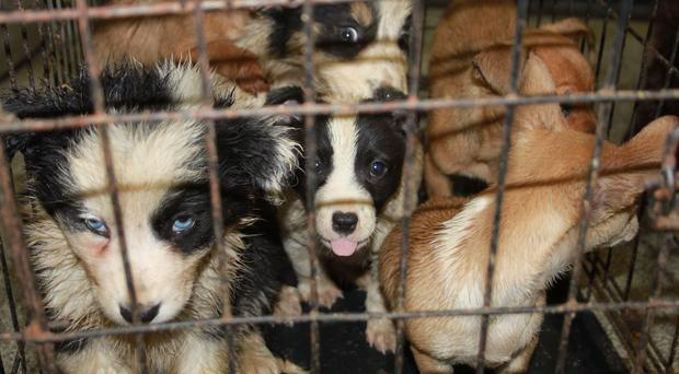 Smuggled Puppies Seized At Port By Scottish Spca Inspectors