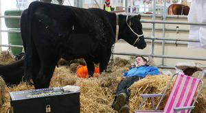 Third day of the 2018 Balmoral Show, in partnership with Ulster Bank, at Balmoral Park. A farmer gets some well earned sleep after a night of watching his cattle ahead of today's showing and judging (Jonathan Porter/PressEye)