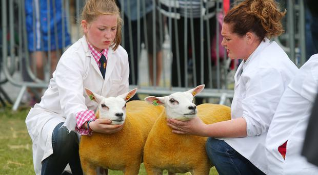 Third day of the 2018 Balmoral Show, in partnership with Ulster Bank, at Balmoral Park. Sheep judging at the show (Jonathan Porter/PressEye)