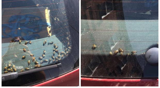 The bees swarmed the car.