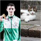 Northern Ireland's gold-winning medalist from the Commonwealth Games Rhys McClenaghan got to meet the Chief Mouser to the Cabinet Office, Larry, during his reception at 10 Downing Street.
