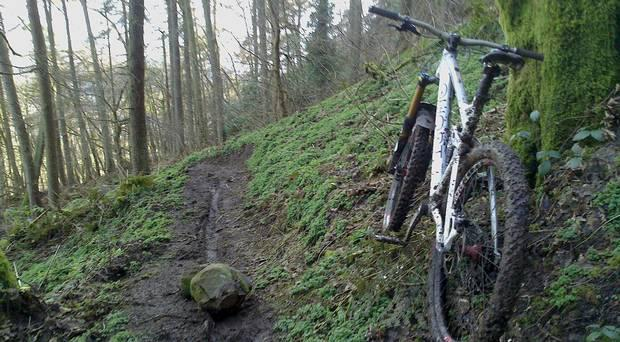 A female biker was left stranded for two hours in a Carrickfergus forest on Tuesday evening after breaking her pelvis. (stock)