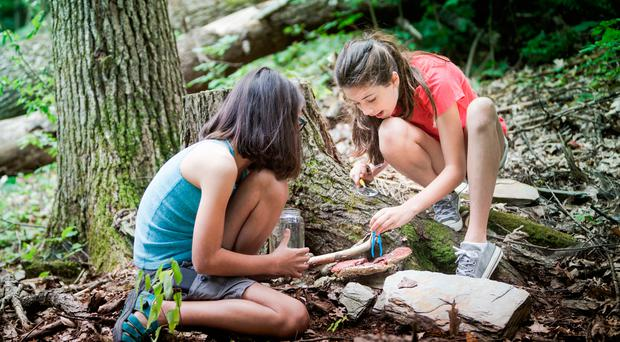 Great outdoors: Forest Schools offer a host of benefits to children