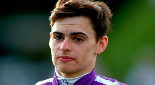 Image result for donnacha o'brien
