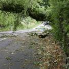 The A30 Glenavy Road was closed due to a fallen tree caused by strong winds. PressEye - Belfast - Northern Ireland - 14th June 2018