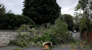 General views of a tree that has fallen at the Robbs Road Dundonald, Belfast ,as Storm Ali batters the province. Picture by Leah Matthews Press Eye ©