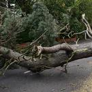 Trees down in the Old Crumlin Road area of Belfast