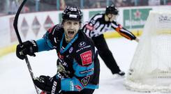 Belfast Giants' Patrick Dwyer celebrates scoring against Sheffield Steelers during Sunday afternoons Elite Ice Hockey League game at the SSE Arena, Belfast - Credit: William Cherry/Presseye