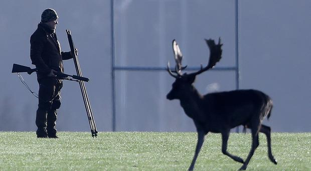 A deer cull is carried out in Phoenix Park in Dublin (Niall Carson/PA)