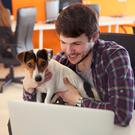'Shades of Silicon Valley are sweeping into Belfast on this front, with office dogs, free beers and even office rabbits becoming more commonplace'