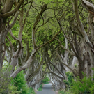 Tourism sites such as the Dark Hedges which featured in Game of Thrones have helped drive NI's economic success
