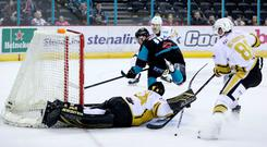 Ice goal: Belfast Giants' Darcy Murphy pops one into the back of the net against Nottingham Panthers yesterday