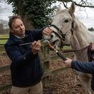 Tested out: vet Jeremy Allen swabs a Polo Pony to test for equine flu
