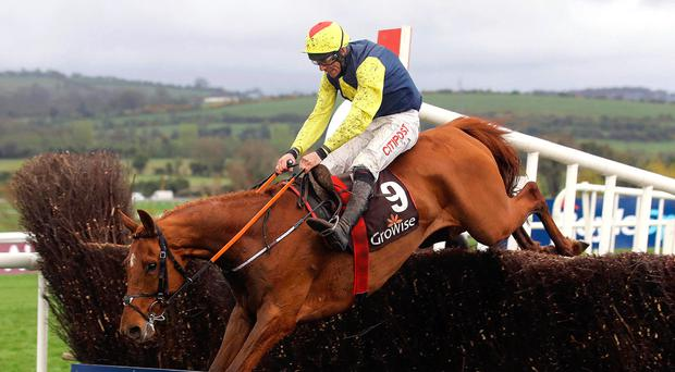 Opportunity: The Storyteller carries local hopes in today's big Ryanair Chase at Cheltenham