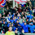 Celebration time: Northern Ireland fans go wild after Josh Magennis' late winner